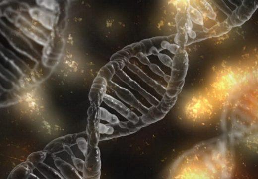 Un estudi internacional a gran escala identifica centenars de gens associats als comportaments de risc en humans