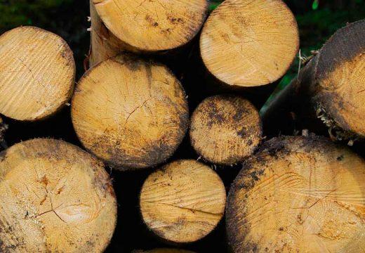El CSMC presenta les conclusions del projecte Biomassa