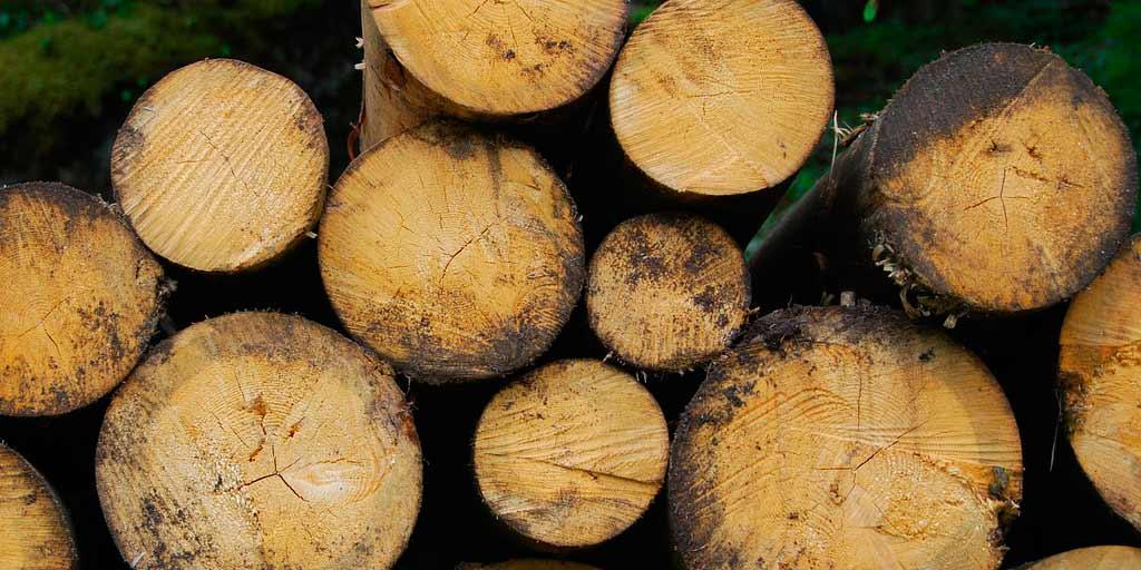 projecte-biomassa